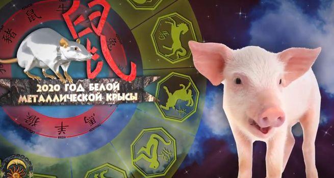 символ свиньи
