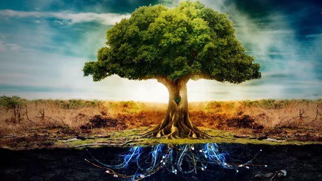 Гармоничность и красота окружающего мира