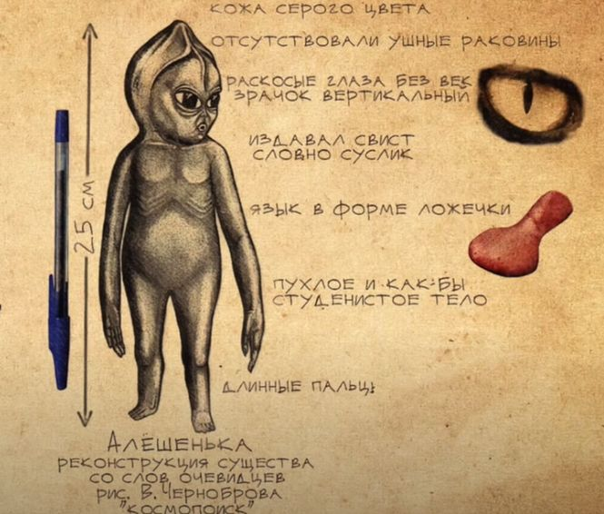Описание карлика Алешеньки