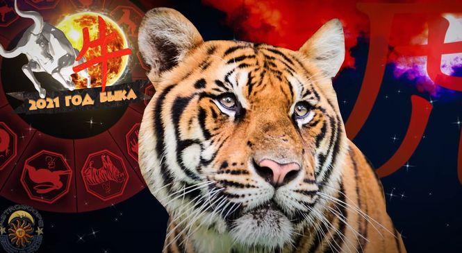 Для Тигров