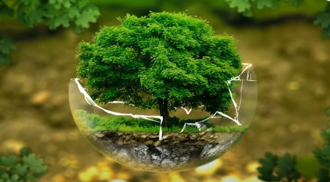 Магические свойства деревьев описаны в народном фольклоре