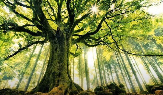 дерево и магия