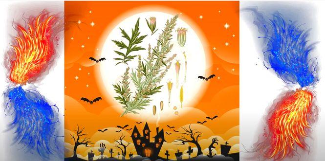 магические свойства трав и фруктов